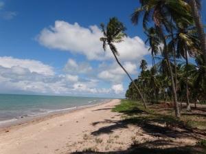 Praia Japaratinga - Maragogi